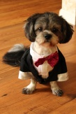 DOG-WEARING-BOWTIE.WEDDING-PHOTO.A-PICTURESQUE-MEMORY-PHOTOGRAPHY.WEDDING-PHOTOGRAPHER