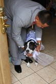 GROOM-PREP.WEDDING-PHOTO.DOG-WEARING-DRESS